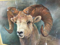 Painting Rocky Mountain Ram  by Marilyn Maddux