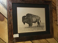 Buffalo Bull by Terry Maddox. Framed.