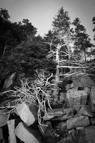 Seaside Composition, Otter Cliffs, Acadia National Park