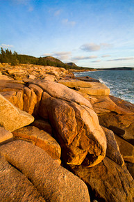 Life Awakens Acadia National Park