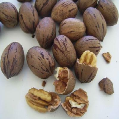 Nuts Shelled Pecans Usa (1x5LB )