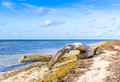 Boca Chica Driftwood Photo Print