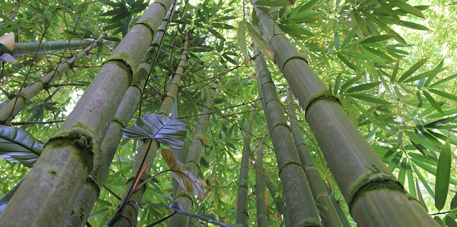 bamboo-forest-large.jpg