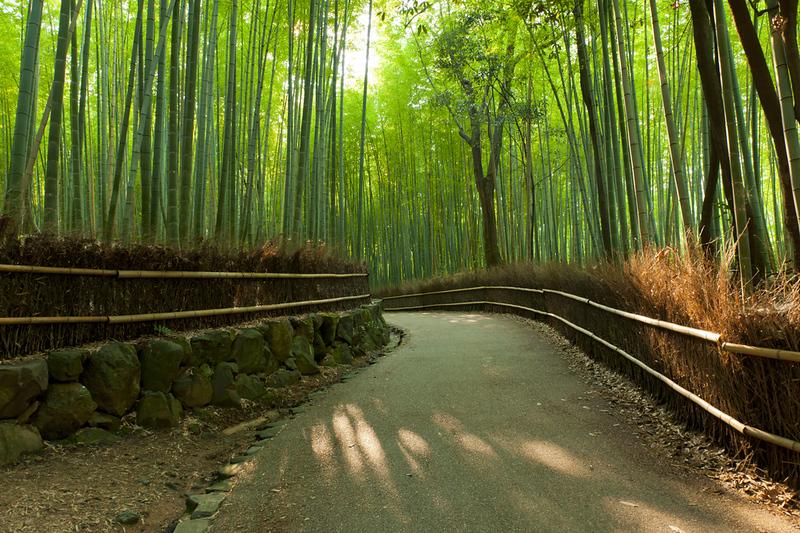 famous-bamboo-grove-arashiyama-l.jpg