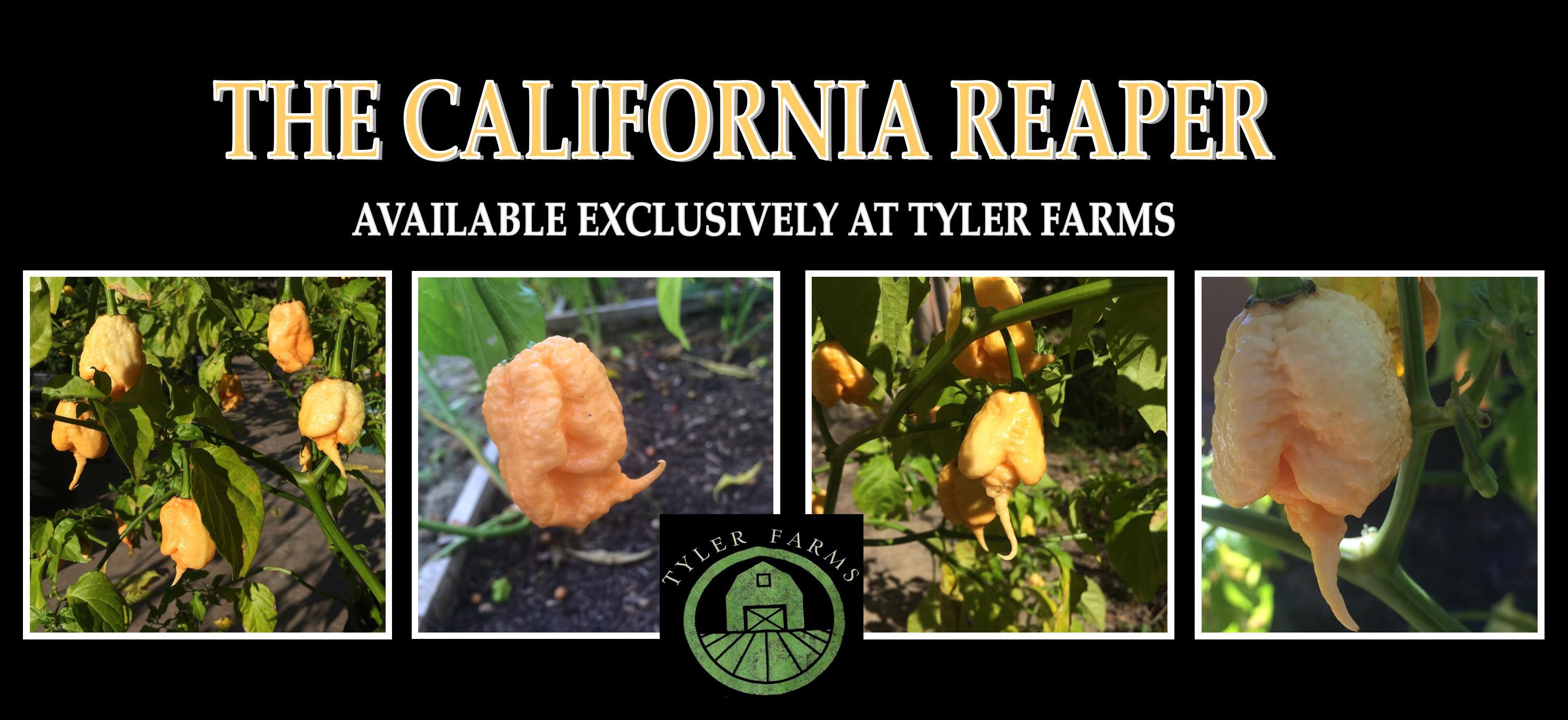 california-reaper-tyler-farms-caro.jpg