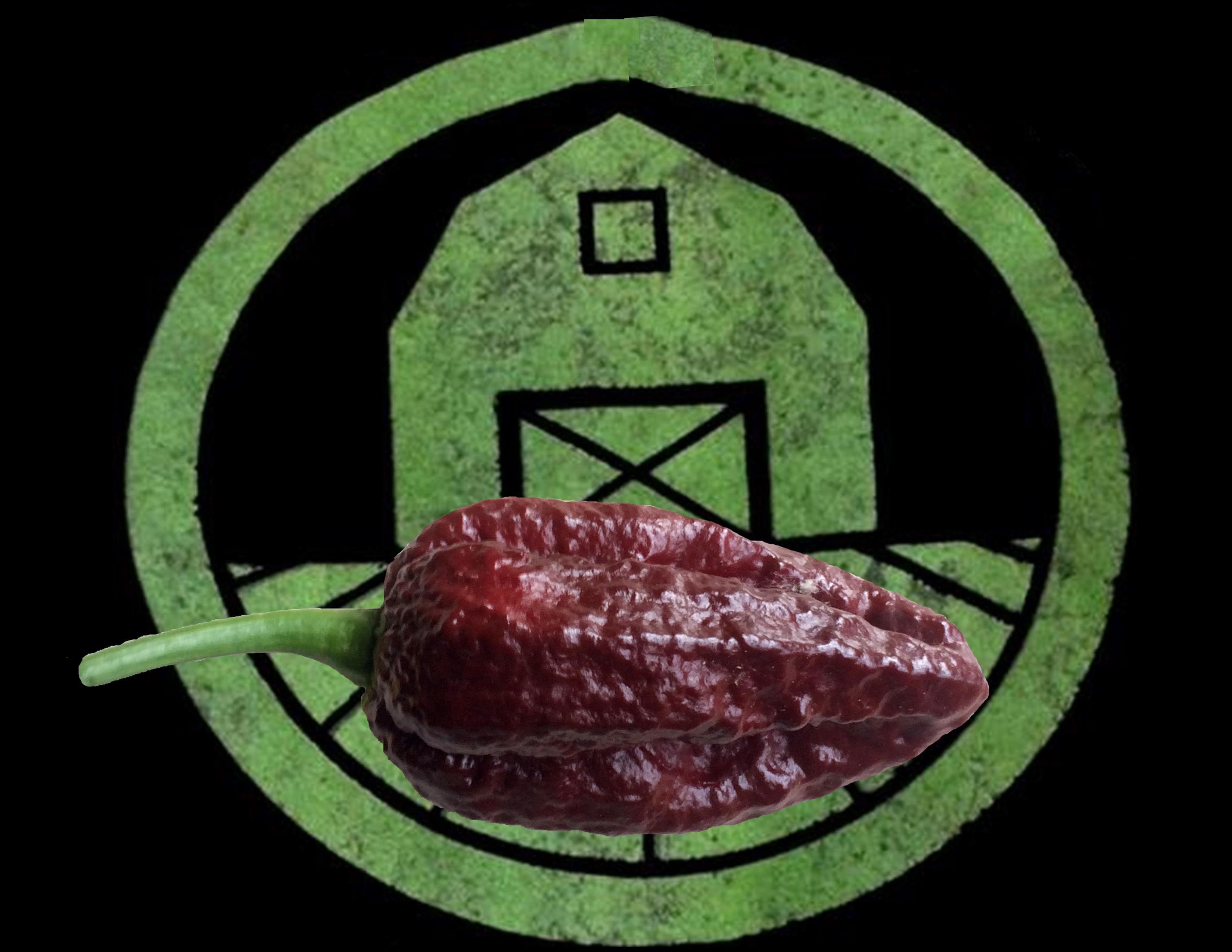 Chocolate Bhutlah Pepper | Tyler Farms