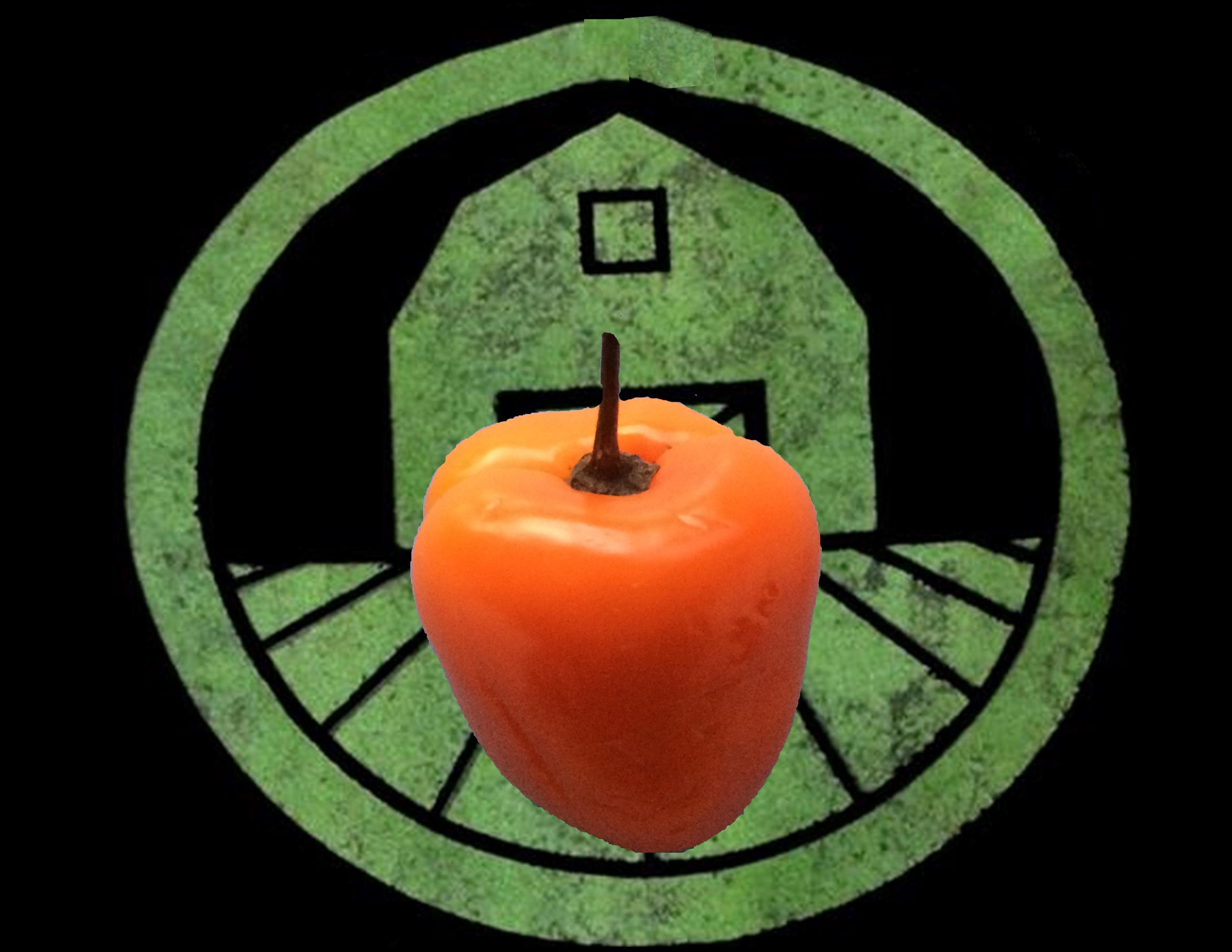 Orange Manzano Rocoto Pepper | Tyler Farms