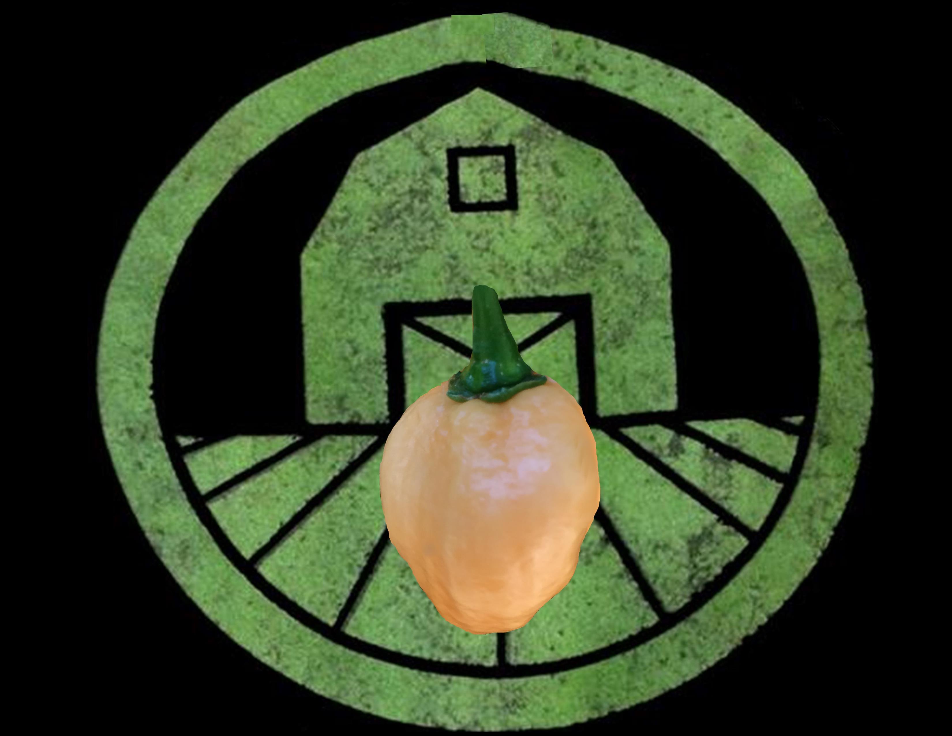 Peach Habanero Pepper | Tyler Farms