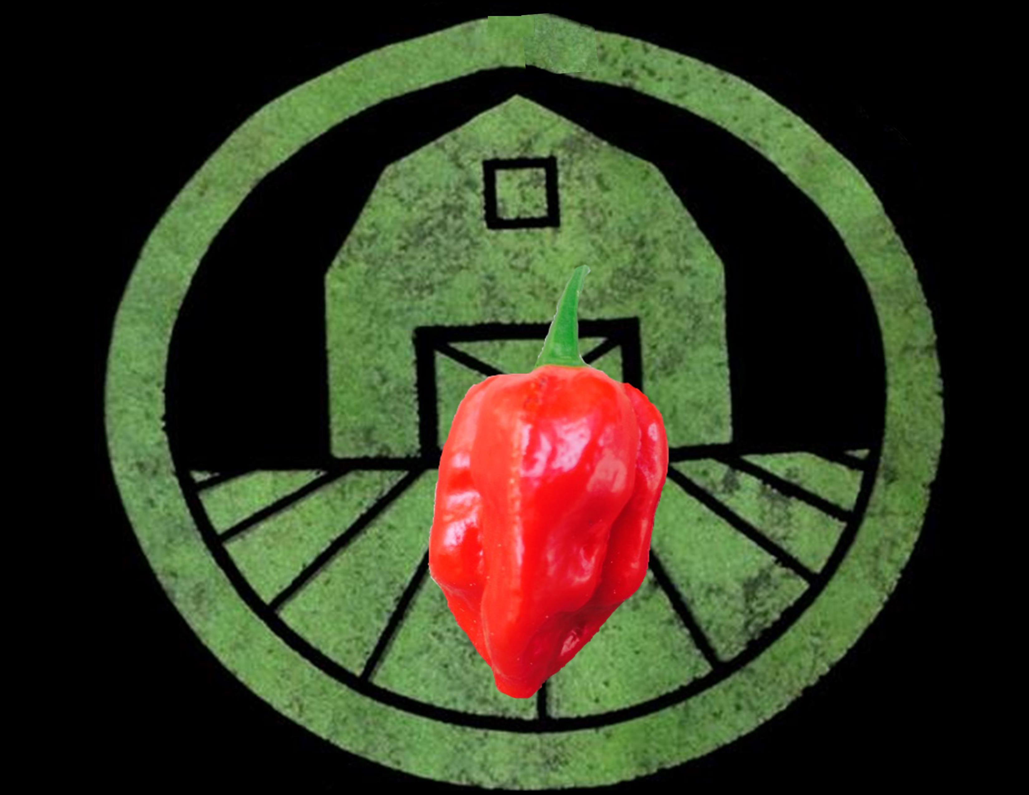 Red Savina Habanero Pepper | Tyler Farms