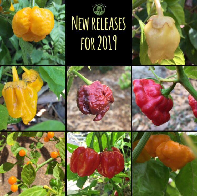 tyler-farms-peppers-new-releases-for-2019.jpg