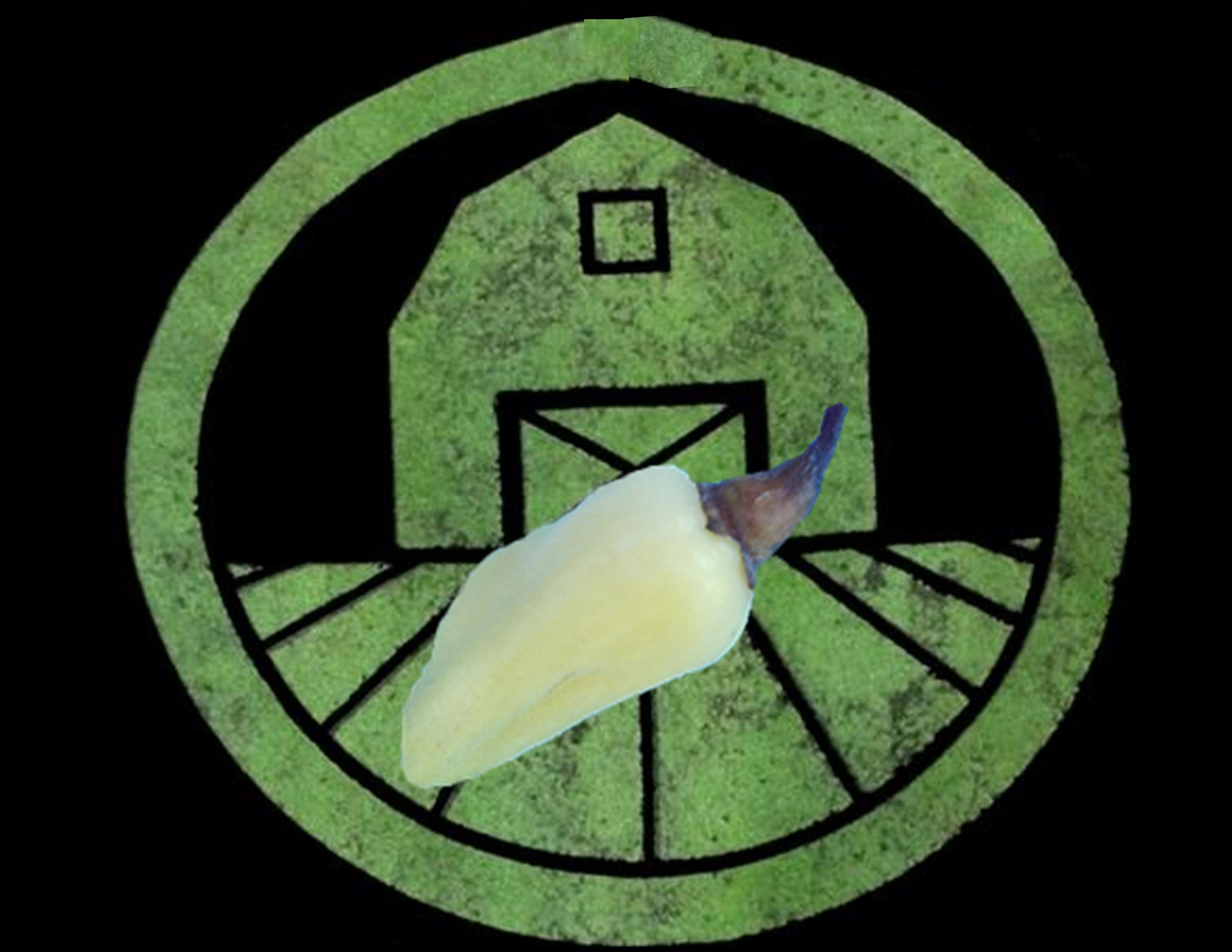 White Habanero Pepper | Tyler Farms