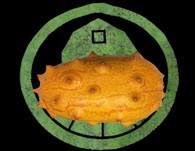 Kiwano Melon (Horned Melon) Seeds