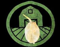 White 7 Pot Bubblegum Pepper | Tyler Farms