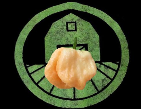 Peach 7 Pot Pepper | Tyler Farms