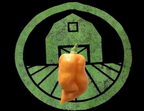 Peach Trinidad Scorpion Pepper | Tyler Farms