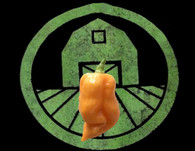 Peach Trinidad Scorpion Pepper | Tyler Farms