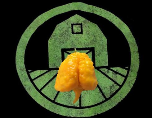 Yellow Carolina Reaper Pepper | Tyler Farms