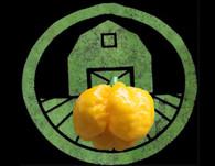 Yellow 7 Pot Brain Strain Pepper | Tyler Farms