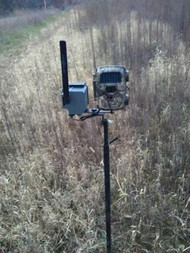 Hammer Trail Cam Post
