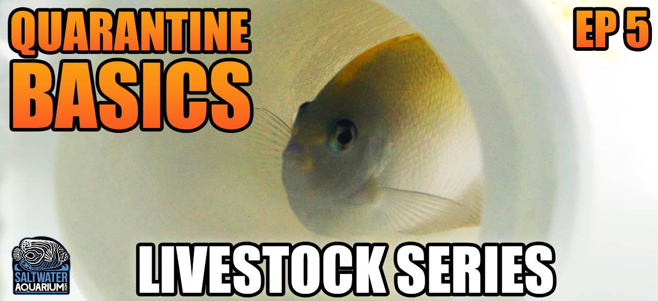SaltwaterAquarium com   Marine Reef & Freshwater Supplies