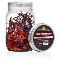 1 oz Pom Pom Gracilaria (Gracilaria hayi) - Algae Barn