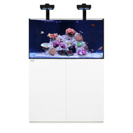 Reef 100.3 White +Plus Edition - Waterbox