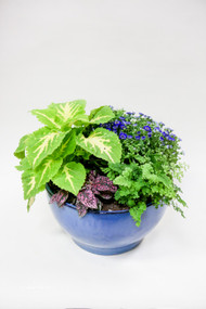 Easy Care Dish Garden