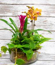 Graceful Orchid Planter
