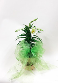 This traditional Easter plant is great to celebrate the holy holiday, but also an accent to your garden in the spring of years to come. Flowers now, a garden accent next year.