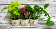 A sweet trio of potted indoor plants in their own pots with water colored designs by Dean Crouser.