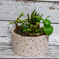 Tranquil Succulents Planter (Large)