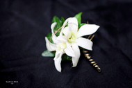 White Orchid with Gold Touches Boutonniere