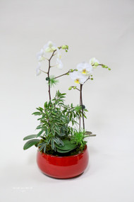 Merry Orchid Planter