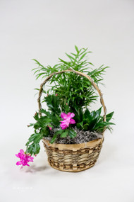 Christmas Cactus Dish Garden arrangement brought to you locally by Earle's Loveland