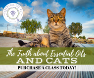 The Truth About Essential Oils And Cats Class | Compliant Social Media Downloadable Workshop