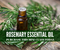 Rosemary Essential Oil Mini-Class   Compliant Social Media Downloadable Workshop