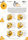 Bee You Recipe Sheets   Essential Oil Roller Bottle Blend Recipes