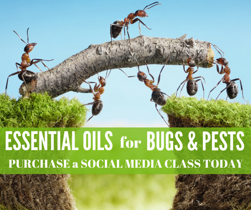Essential Oils for Bugs & Pests Online Facebook Class