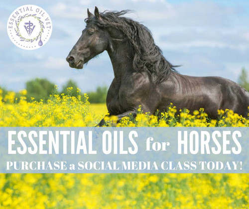 Essential Oils for Horses Compliant Online Facebook Class
