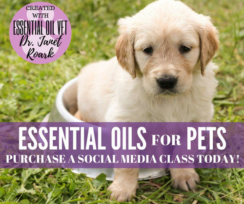Essential Oils for Pets Compliant Online Social Media Class