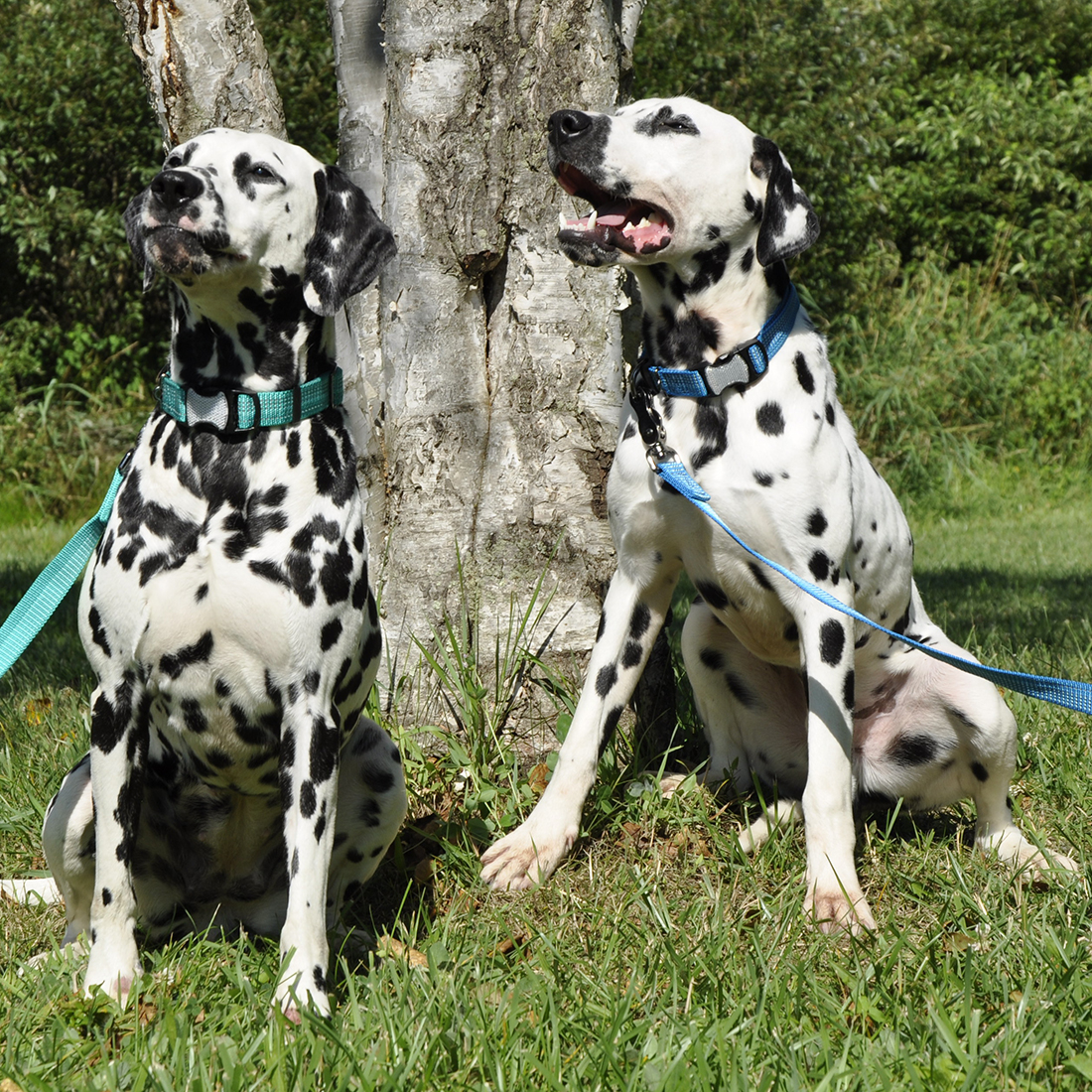 K9 Explorer Dog Collar and Leash
