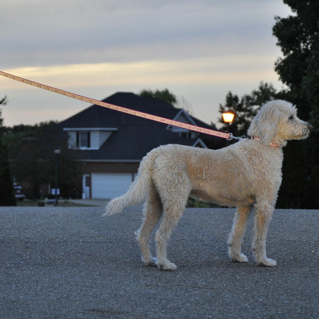 Coastal Pet Lazer Brite Reflective