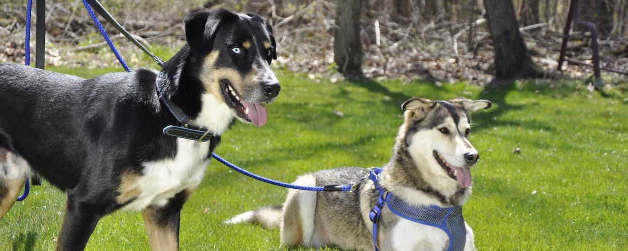 coastal-pet-dog-collars-leashes-and-harnesses.jpg