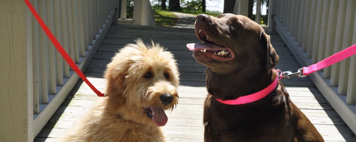 coastal-pet-dogs-wearing-classic-nylon.jpg