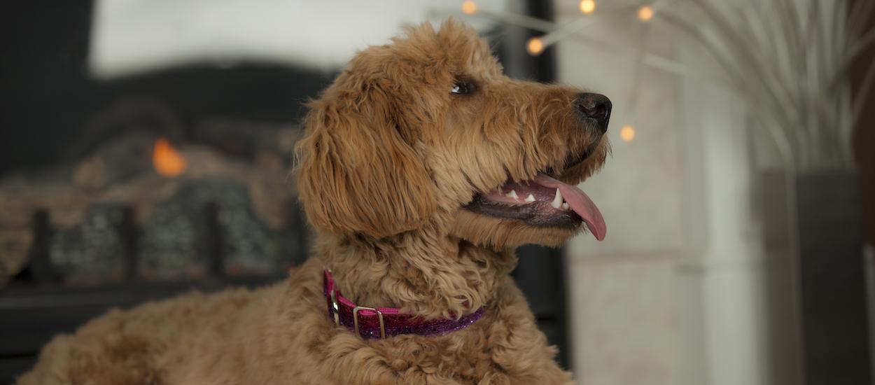 coastal-pet-sparkles-series-on-cute-dog.jpg