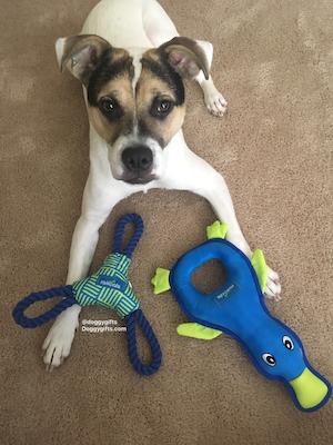 Rascals Fetch Dog Toys