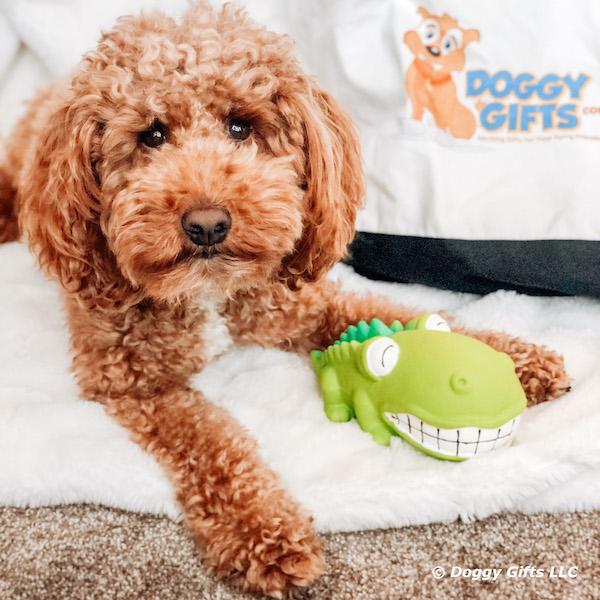 kona-loves-the-rascals-grunt-dog-toys.jpg