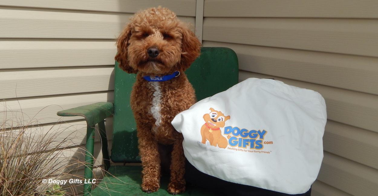kona-wearing-coastal-pet-personalized-collar-banner.jpg