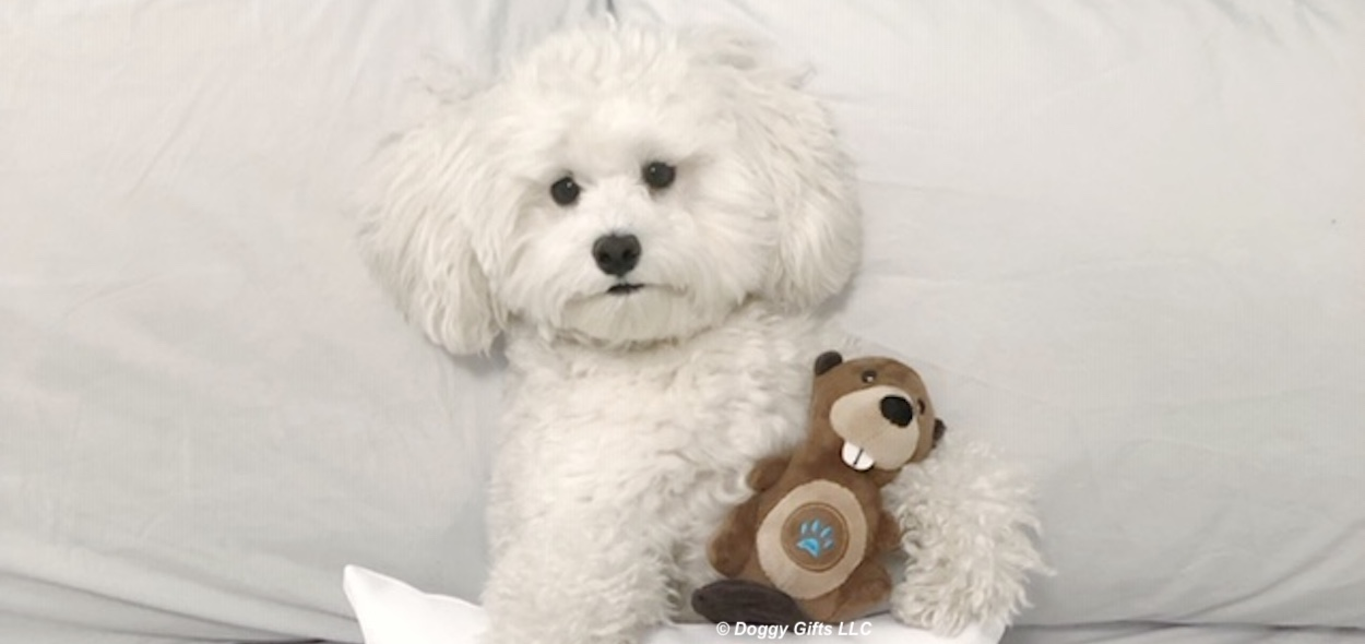 lil-pals-plush-dog-toys-with-sweet-baby-charlie.jpeg
