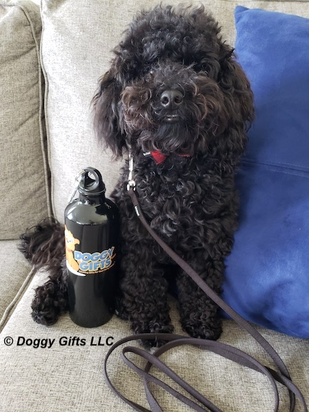 our-doggygifts-friend-bo-wearing-coastal-pet-lil-pals.jpg